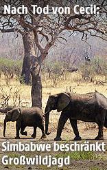 Elefantenherde im Hwange National Park in Simbabwe