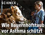 Ein Mädchen im Stall neben Kühen