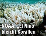 Gebleichte Korallen im Great Barrier Reef, Australien