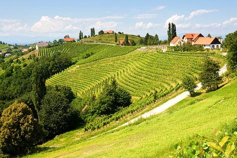 Weinhang im südsteirischen Gamlitz