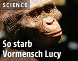 Modell des Australopithecus afarensis namens Lucy