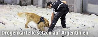 Ein argentinischer Fahnder durchsucht mit einem Drogenhund Reissäcke