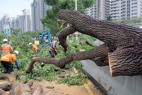Umegstürzte Bäume