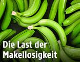 Grüne Bananenstauden