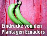 Bananenplantage in Ecuador