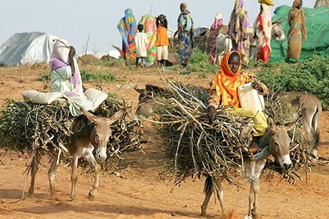 Sudanesische Mädchen transportieren Brennholz mit Eseln