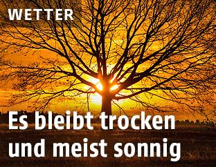 Aufgehende Sonne hinter blätterlosem Baum