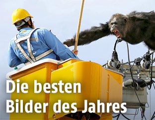 Ein Affe attackiert einen Arbeiter