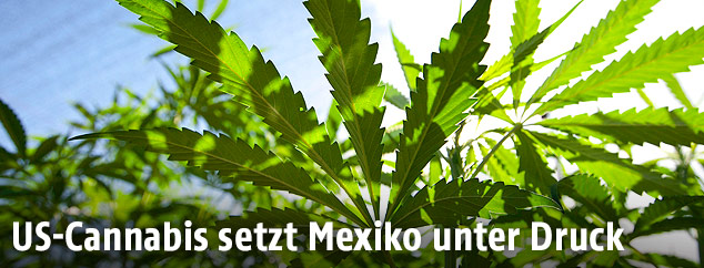 picturedesk.com/Susana Gonzalez