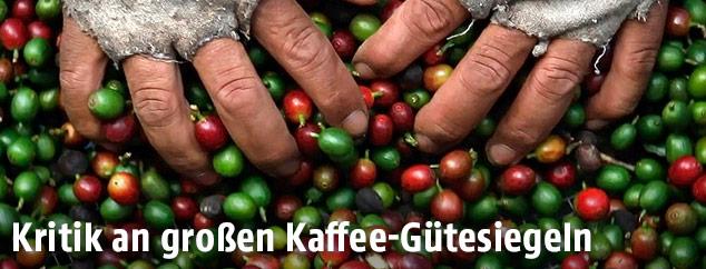 Hände beim Sortieren von Kaffeebohnen