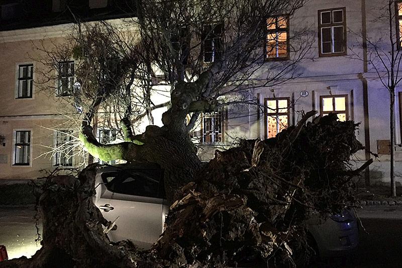 Auto unter umgestürzten Baum