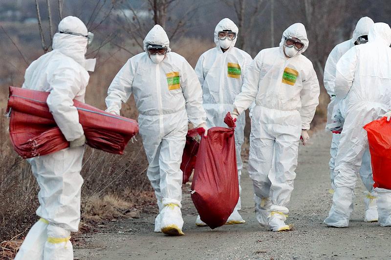 Männer in Sicherheitsnazügen entsorgen Tierkadaver