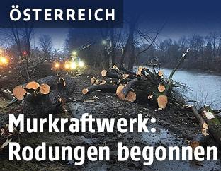 Rodungen für die Staustufe Puntigam in Graz