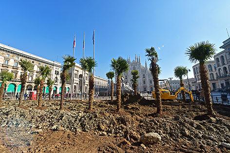 Palmen vor dem Mailänder Dom