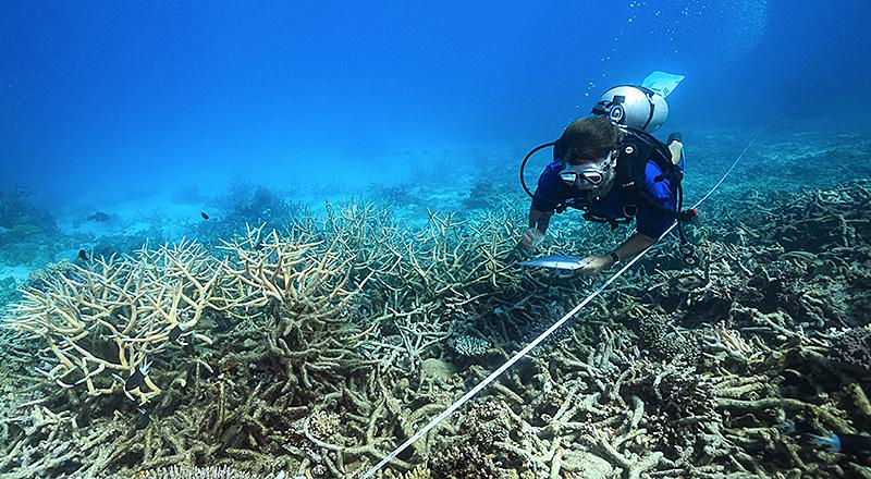 Ein Forscher des ARC Center of Excellence bei Messungen am Great Barrier Reef