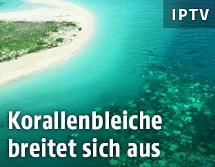 Korallenbleiche am Great Barrier Reef