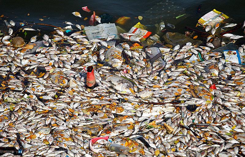 Tote Fische in einem See in Bangalore
