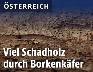 Schadholz
