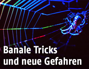 Spinne in Spinnennetz