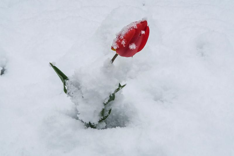 Eindrüche vom späten Wintereinbruch