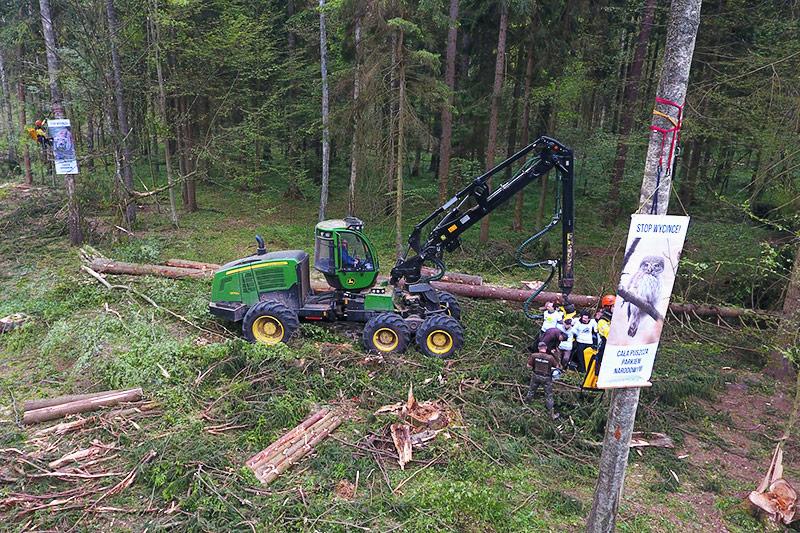 Greenpeace-Aktivisten im Wald