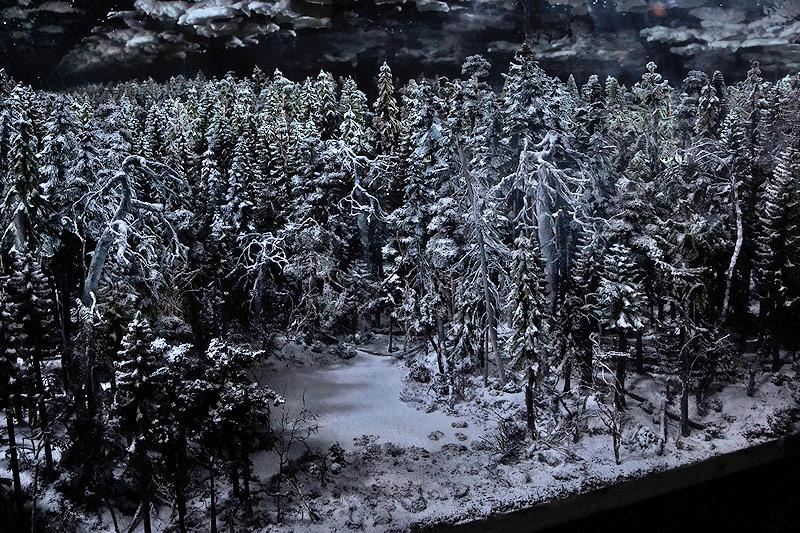Mondwald des Finnen Jussi Kivi