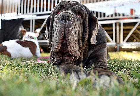"""Der """"Hässlichste Hund der Welt"""""""