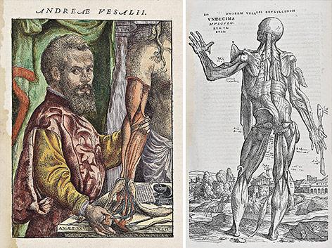 Grundlegendes Werk der neuzeitlichen Anatomie von Andreas Vesalius