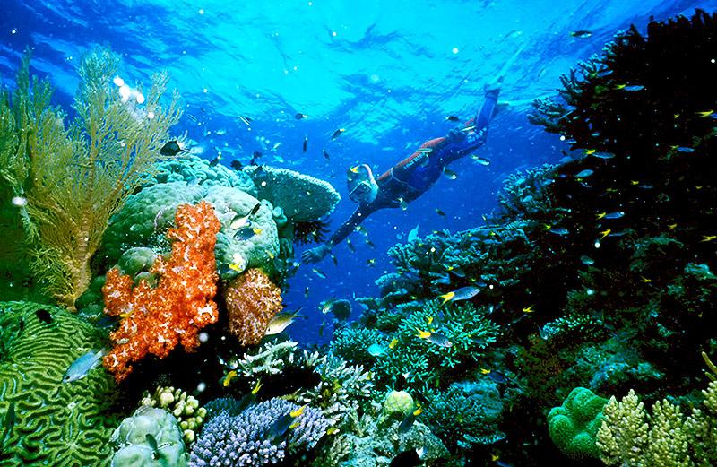 Korallen im Great Barrier Reef