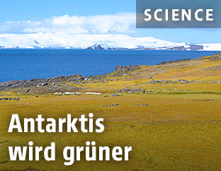 Gras in Antarktis
