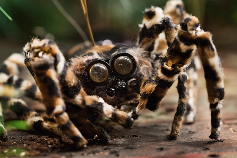 BF 2017 Wagner Insekten