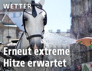 Ein Fiakerpferd wird mit Wasser gespritzt