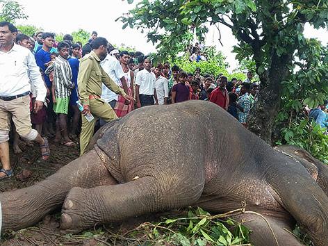 Menschenmenge steht neben dem erschossenen Elefanten