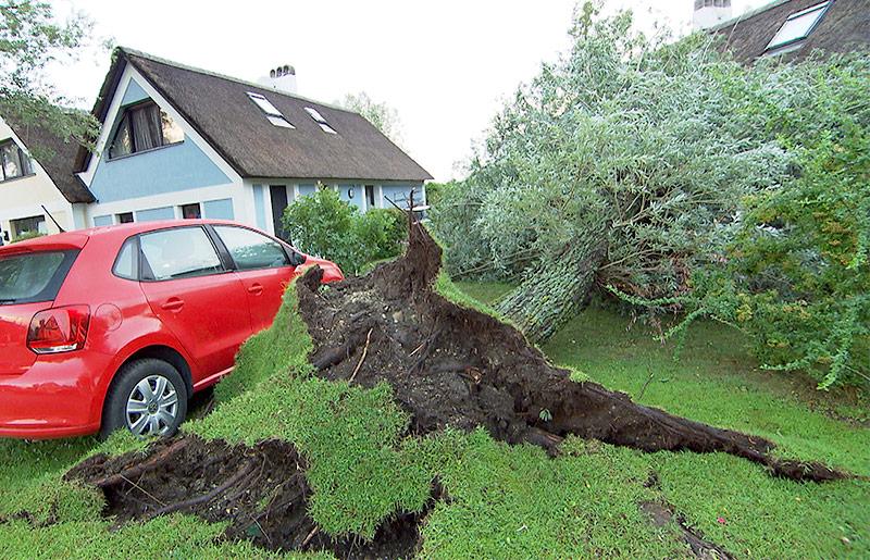 Umgestürzter Baum in Weiden am See