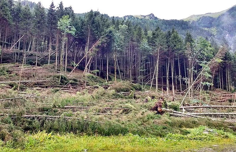 Umgestürzte Baume in Kleinsölk