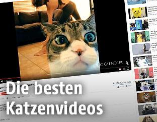 Katzenvideo auf Youtube