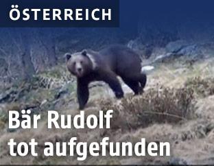 Bär Rudolf in Kärnten