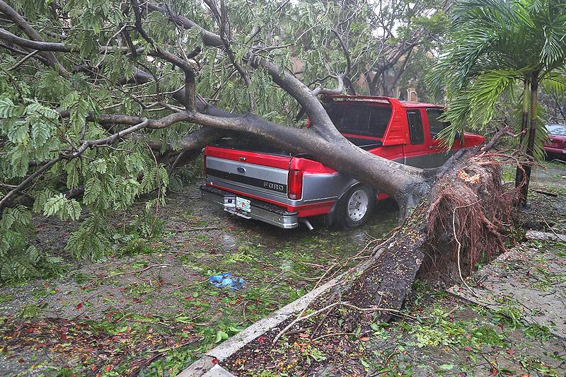 Baum auf Pick-up-Truck