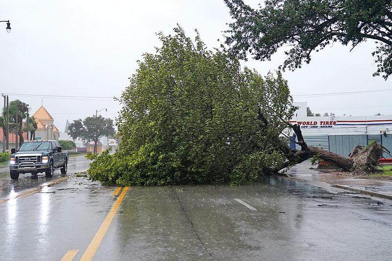 Ein Auto fährt an einem umgestürzten Baum vorbei