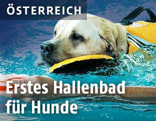 Hund im Hundeschwimmbad