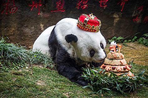 """Panda """"Basi"""""""