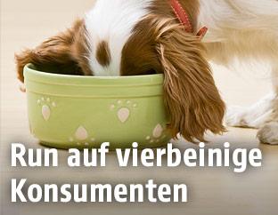 Hund beim Fressen