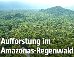 Luftaufnahme des Regenwaldes in Brasilien