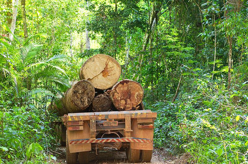 Mit Holz beladener LKW im brasilianischen Regenwald