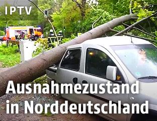 Baum auf Autodach