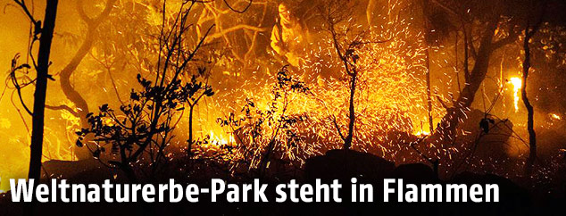 Waldbrand in Naturpark