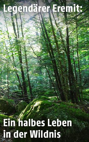 Der Jarsey-Wald im Sommer