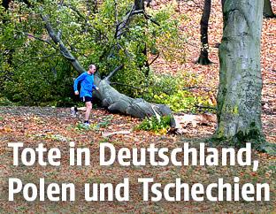 Läufer vor einem riesigen umgestürzten Baum in Tschechien