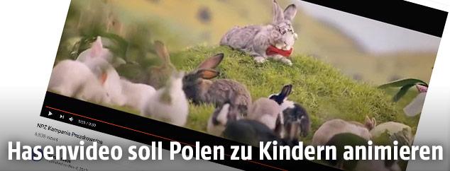 Screenshot einer YouTube Seite zeigt ein Hasenvideo