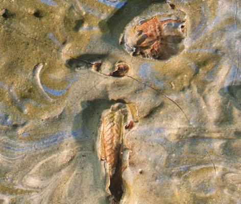 """Mikroskopaufnahme von Van Goghs Gemälde """"Olivenbäume"""" mit Heuschrecke"""